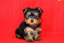 My future puppy<3