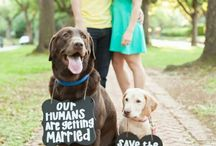 Engagement | Pets
