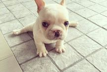 Doggy ❤️❤️