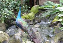 Birds of Paradise / Beautiful creatures with feathers