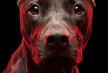 Cool dogz