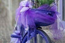 My violet