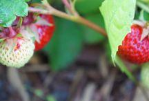 Landskap och sommarglädje