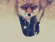 {fauna} / by { wild & ambitious }