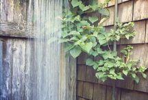 Gartendusche