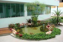 lagos ornamentais