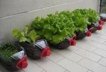 horta em galões de agua
