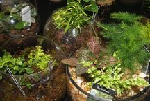 Terrarium Gardens / Terrarium gardens are becoming increasingly popular. They are easy to maintain as well as inexpensive to create.  Creating a terrarium garden is a great project to do with kids while teaching them about habitats.