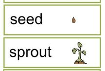 Plants and Trees PRE K