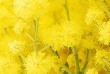 Jaune / Le jaune nous fait penser à la chaleur du soleil et à la richesse. Le jaune est une couleur gaie qui représente la joie, la tonicité et la douceur en même temps, l'énergie, la richesse, l'opulence, l'intelligence, le dynamisme …