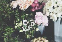 Plants&Flowers