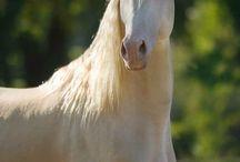 beautiful and unique-horses