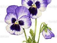 Çiçek resimlerl