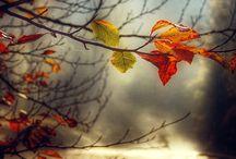 Осень:з