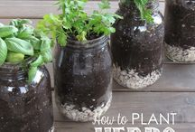 herb gardens in pots
