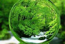 Green / Everything  Green