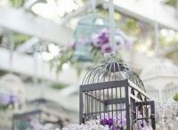 Lavender / Brautiful Lavender