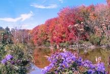 Fall in Hocking Hills / The most popular season in the Hocking Hills -- in full splendor!