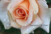empress of dirt