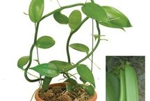 plantas saki