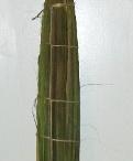 Palm Sunday Foliage