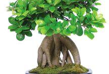 bonsai & kokedama