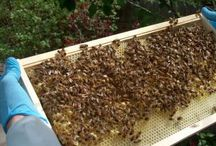BUZZ / Anything bee related