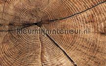 Fotobehang (sloop)hout