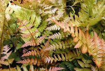 Kim's Favorite Shade Plants / Attractive and functioanl perennials and shrubs for the shade. Kim@smithtree.com / by Kim Boruszewski