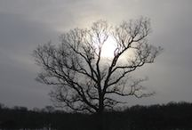 """Solstice June 2012 / Summer Solstice 2012 arrives June 20 at 6:10 p.m. CDT (11:10 p.m. GMT) when the Sun leaves Gemini and enters emotional, imaginative Cancer. This is one of the year's four """"power days"""" or cardinal points of the year (the others are the winter/December Solstice and the two equinoxes). It's a great opportunity to consider how important the Sun is to life on Earth..."""