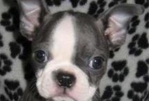 puppies ♡ ❤