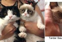 Grumpy & Pokey Cat