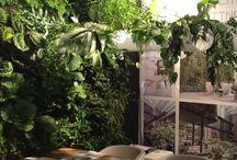 planten sens kantoor