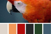 colors / by El rinconcito de Zivi Zivi