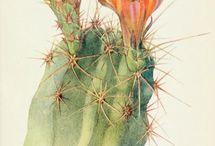 растения ботанические