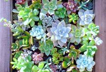 Arrangements Succulentes