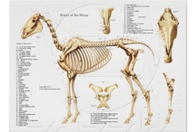 Medicus Veterinarius / Veterinary student posts