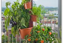 Urban Gardens / Even with a little bit of space, you can create and grow the best and freshest ingredients anywhere from your roof to your balcony.