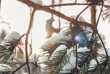 Winter / Winter, snow, travel, nature