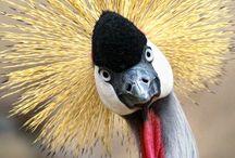 Ptaki / Ptaki – gromada stałocieplnych zwierząt z podtypu kręgowców. Istnieje około 10 tys. gatunków ptaków, które zamieszkują ekosystemy na całym świecie.