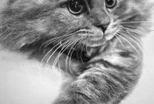 cats / by Fritzi Frey