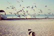 Sea heals everything ..  / Disfrutando del mar, de la vida ...