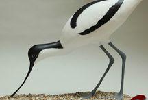 Oiseaux taille réelle