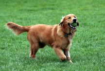 Kutyák / Képek