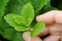 Herbs, growing and using...