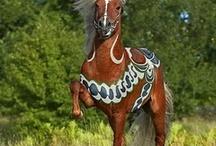 IJslandse paarden / IJslander in alle kleuren