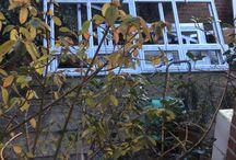 Get Pro Copy home office / 3 Elmgrove Road, Gorleston, Norfolk
