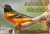 Maryland Wildlife / This board is dedicated to those cute critters that call Maryland home.