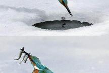 Uccelli / Natura