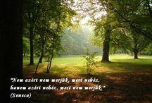 Képes idézetek
